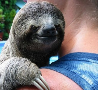 Don't trust a Sloth...ever